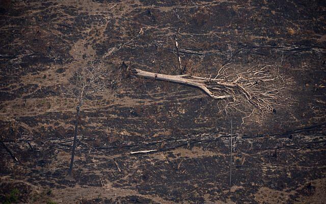 Uma árvore derrubada está cercada por fragmentos de árvores queimadas em um campo deixado queimado por incêndios florestais perto de Porto Velho, Brasil, em 23 de agosto de 2019. (AP Photo / Victor R. Caivano)