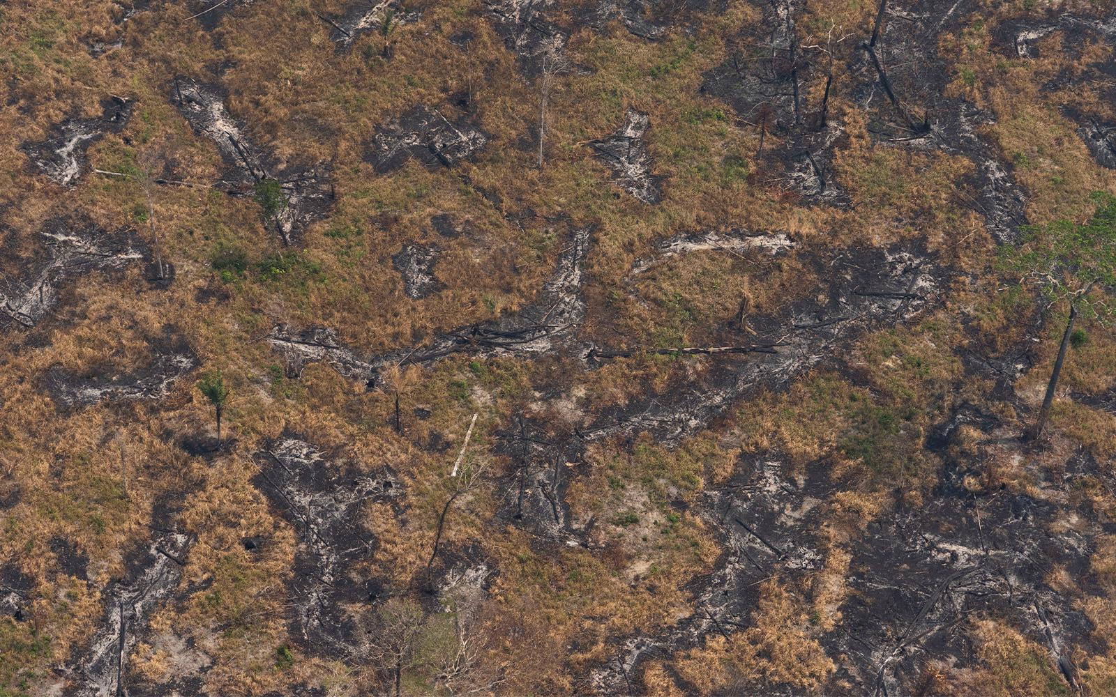 Charred trees felled by wildfires are seen near Porto Velho, Brazil, Aug. 23, 2019. (AP Photo/Victor R. Caivano)