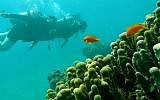 The Gulf of Eilat. (Dr. Ilan Malster, Environmental Protection Ministry)