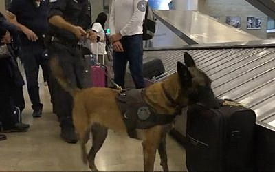 Screen capture from video of Katcha, the Israel Tax Authority's champion sniffer dog. (Channel 12)