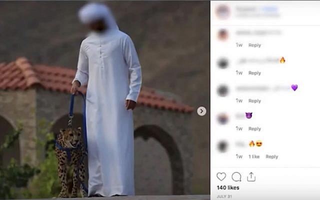 Gulf Arabs' demand for cheetahs as pets 'fuels their
