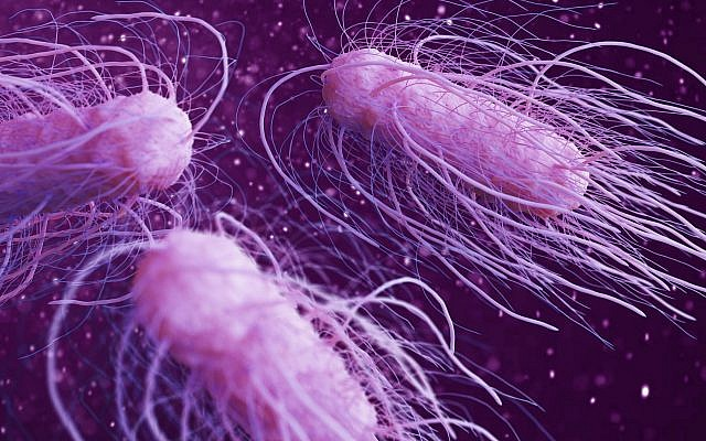 A 3D illustration of the Salmonella bacteria (urfinguss; iStock by Getty Images)
