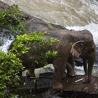 This photo by Thai News Pix taken on October 5, 2019 shows two elephants (one behind the other) trapped on a small cliff at a waterfall at Khao Yai National Park in central Thailand as rescuers work to save them. At least six wild elephants drowned after tumbling down a waterfall in the Thai national park, authorities said on October 5. (PANUPONG CHANGCHAI / THAI NEWS PIX / AFP)