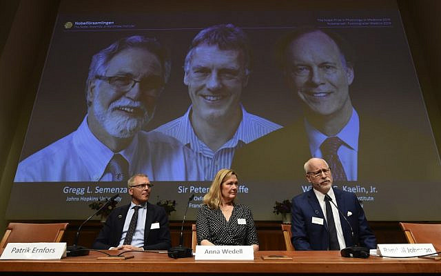 Nobel Assembly members (L-R) Patrik Ernfors, Anna Wedell and Randall Johnson sit in front of a screen displaying the winners of the 2019 Nobel Prize in Physiology or Medicine (L-R) Gregg Semenza, Peter Ratcliffe and William Kaelin after their names were announced during a press conference at the Karolinska Institute in Stockholm, Sweden, on October 7, 2019. (Jonathan NACKSTRAND / AFP)