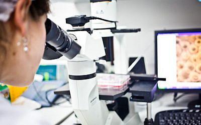 A researcher working in the lab of Kadimastem in Ness Ziona (Hagit Stavinsky)