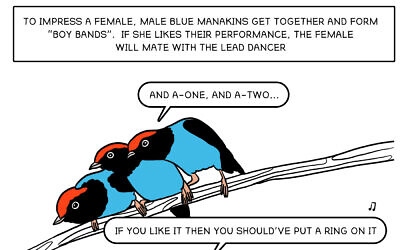 Part of 'The Bird Guide' comic strip by Noa Katz (Courtesy Noa Katz)