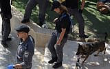 Police conduct searches for illegal weaponry in Arab towns in Wadi Ara, October 12, 2019 (Israel Police)