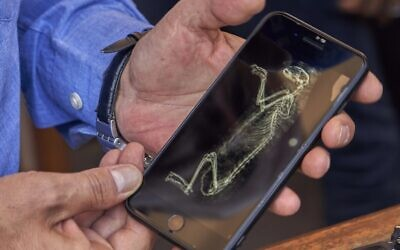 Mostafa Waziri, secretary general of the Supreme Council of Antiquities, shows an image of CT-scan of a lion cub in Saqqara, south Giza, Egypt,  Saturday, Nov.  23, 2019 (AP Photo/Hamada Elrasam)