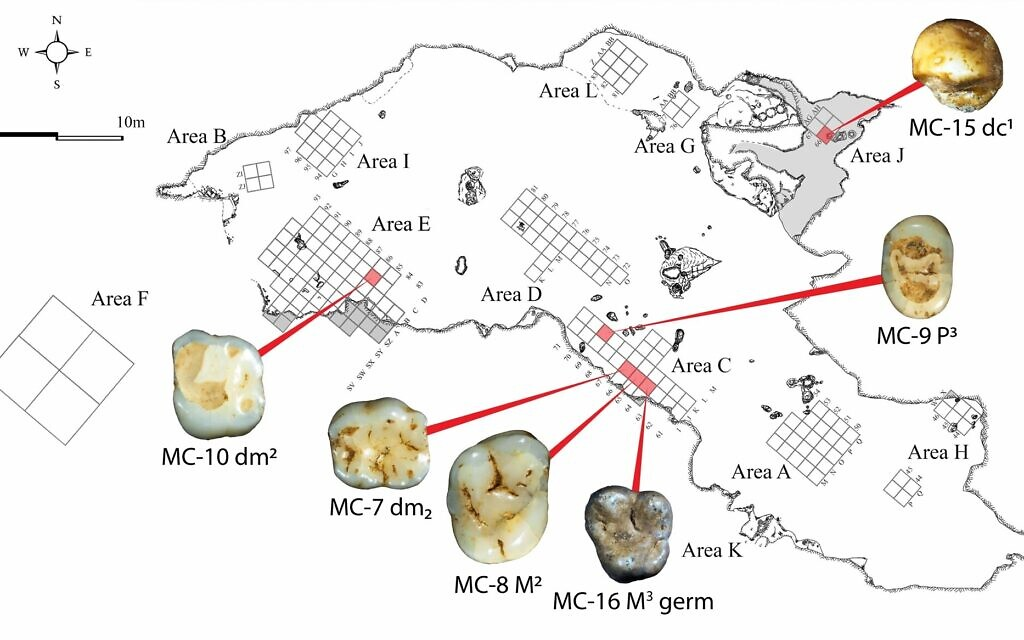 A map of Manot cave excavations cites with indication for the location of the 40,000-year-old teeth. (Dr. Rachel Sarig)
