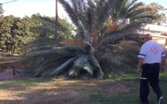 A Magen David Adom rescuers walks beside a palm tree knocked over by the wind in Kibbutz Bahan north of Tel Aviv on November 18, 2019, injuring two girls. (Screen capture/MDA footage)