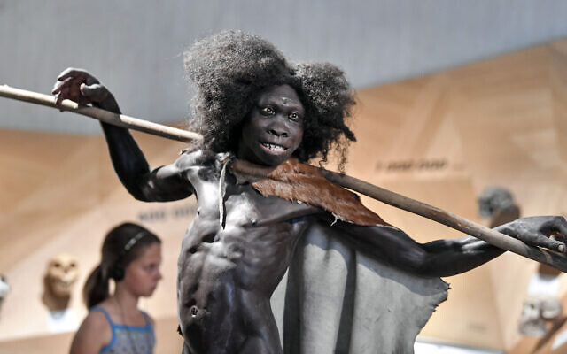 A reconstruction of the 1,600,000 years old Homo erectus 'Turkana boy' is seen at the Neanderthal Museum in Mettmann, Germany, July 3, 2019. (AMartin Meissner/AP)