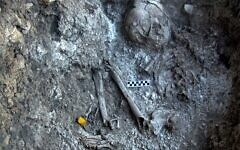 Close-up of a 12,000-year-old human burial embedded in the white material found in the Ein Gev cave. (courtesy)