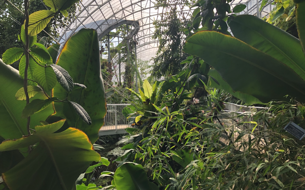 The rainforest interior of the renovated Tropical Conservatory at the Jerusalem Botanical Gardens. (Jessica Steinberg/Times of Israel)