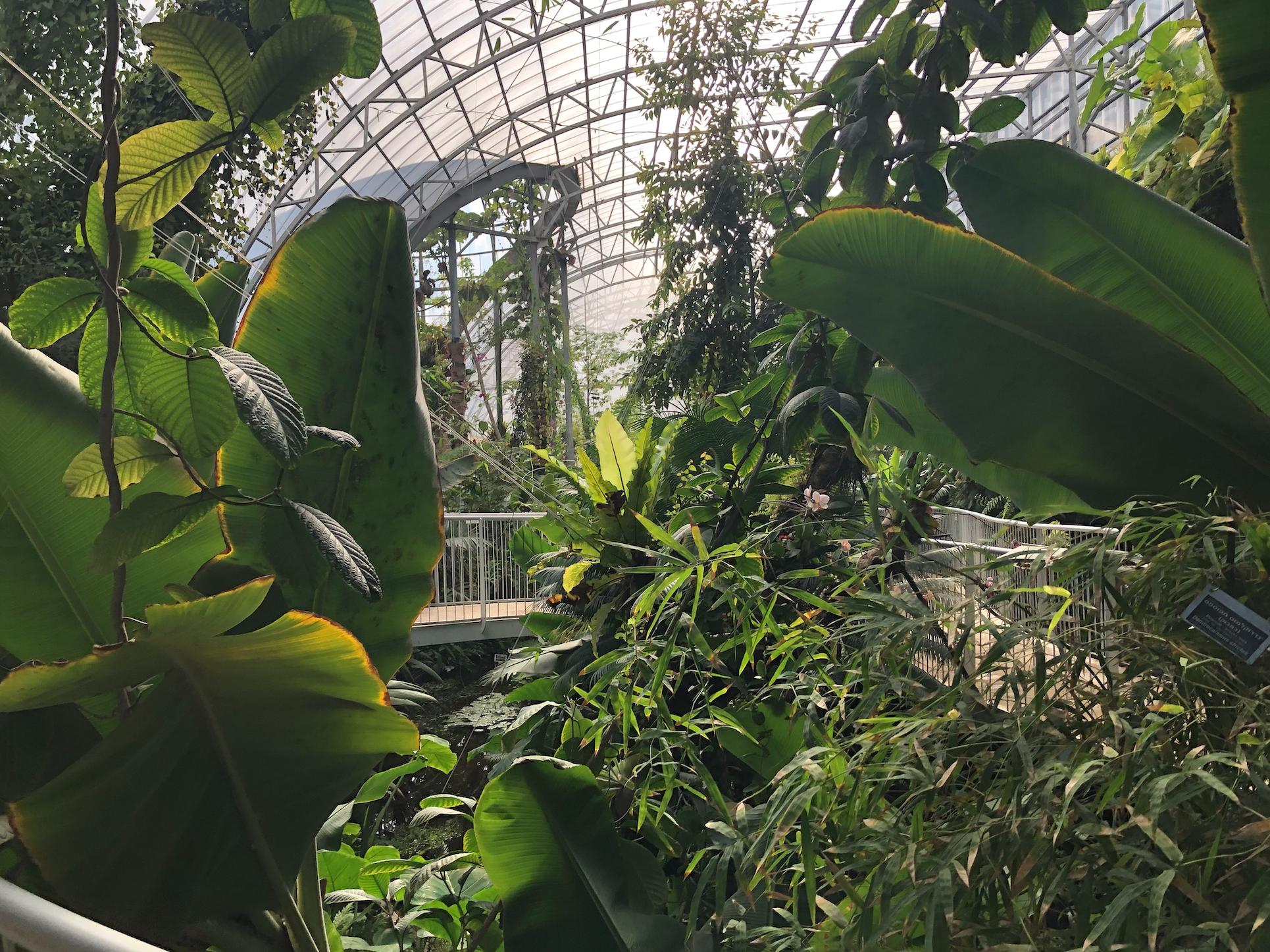 With Rainforest And Rare Species Little Known Jerusalem Garden