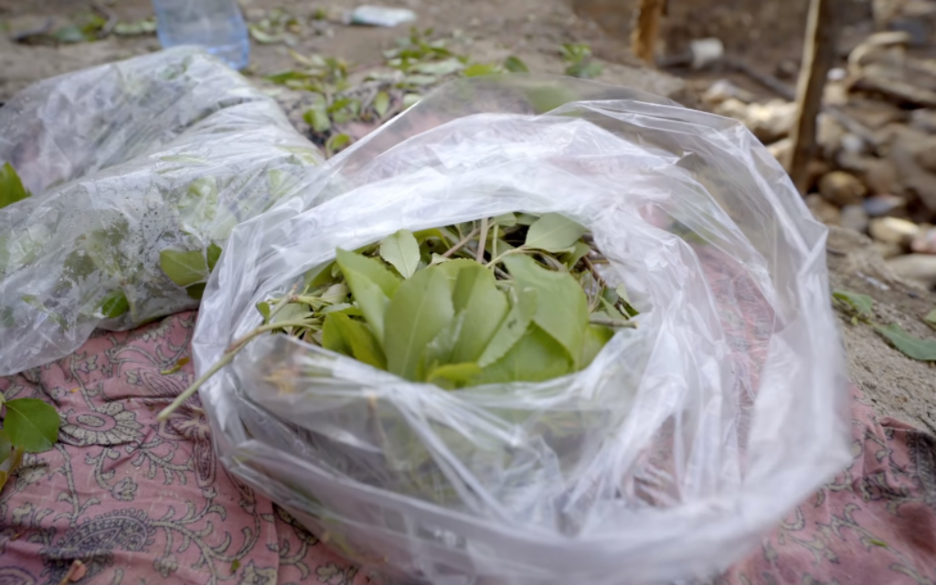 Israel says citizens being arrested across Europe while trying to smuggle khat