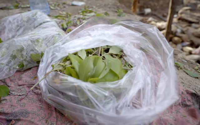 Illustrative: Khat leaves (YouTube screenshot)