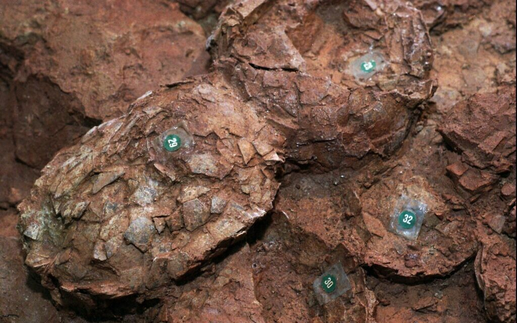 Israeli scientists say dinosaur egg fossils point to warm blood - The Times of Israel