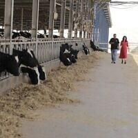 Dr Sivan Lacker and Ashkar Ginossar at the Yotvata Dairy in southern Israel. (Lior Nordman)