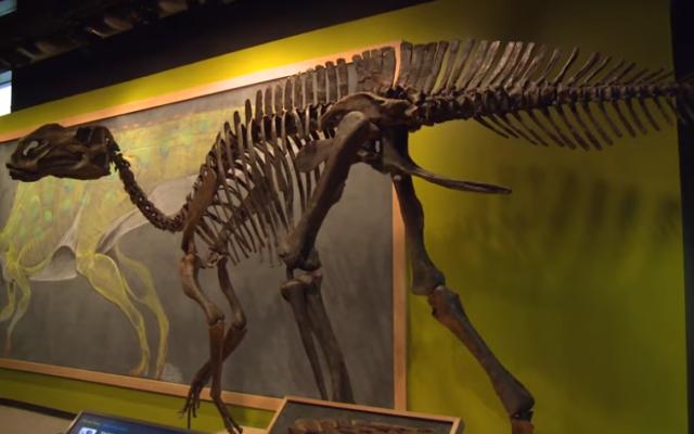 Illustrative: A Hadrosaurus at Drexel University in Philadelphia. (YouTube screenshot)