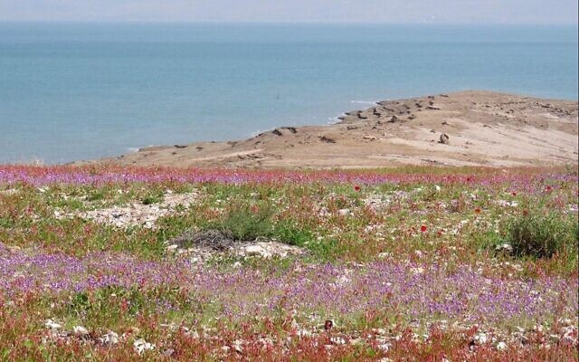Wildflowers at the Dead Sea. (Avner Rinot, Society for the Protection of Nature in Israel)
