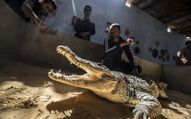 Mamdouh Hassan (R) shows a crocodile to visitors at his house in the Nubian village of Gharb Soheil, on the west bank of the Nile river off Egypt's southern city of Aswan, February 3, 2020. (Khaled Desouki/AFP)
