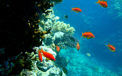 Coral reefs near the Red Sea city of Jeddah, Saudi Arabia, Dec. 13, 2008. (AP/Hassan Ammar)
