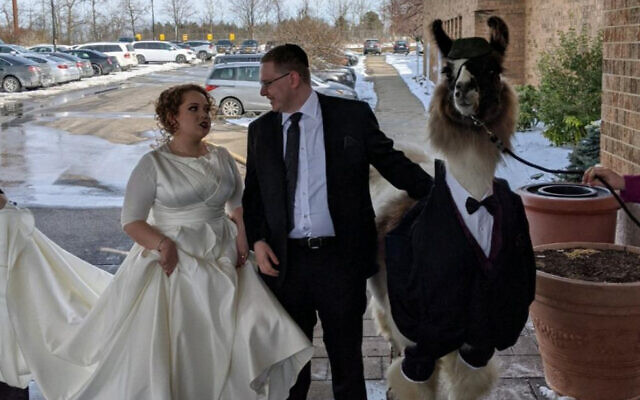 Mendl Weinstock and his sister Riva posing for a picture with Shocky the llama in Cleveland, Ohio on March 1, 2020. (Courtesy of Mendl Weinstock via JTA)