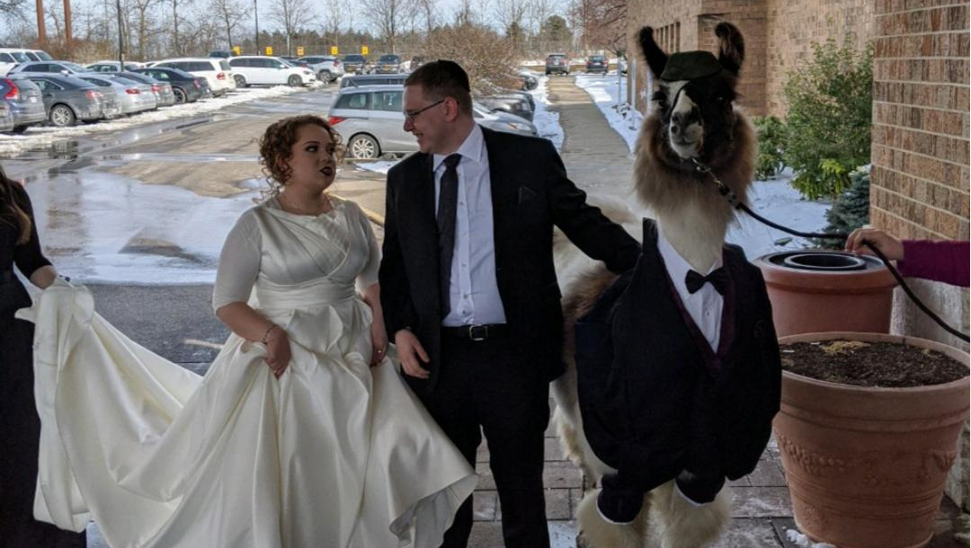 Bride Riva Weinstock Vows Revenge Over Brother Mendl Weinstock's Llama Wedding Guest