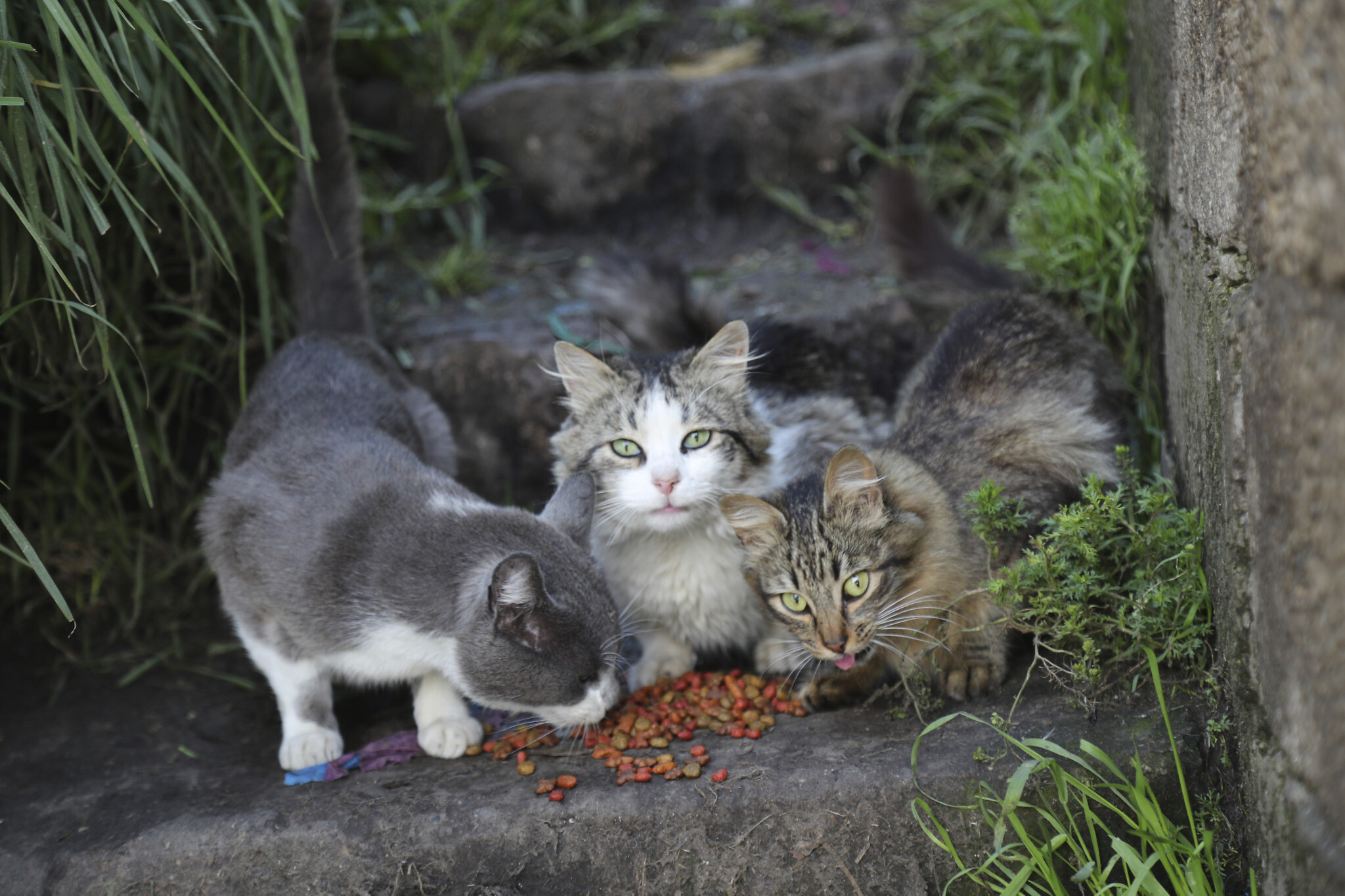 Two pet cats test positive for coronavirus in US