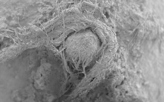 This electron microscope image provided shows part of a Neanderthal cord from Abri du Maras, France. (M-H. Moncel via AP)