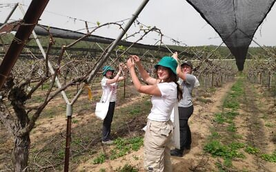 Mechina students from Eliav, a pre-army prepatory program near Kiryat Gat, where they have been volunteering in farmers' fields during the coronavirus (Courtesy Dafna Novik)