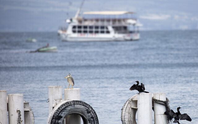 In this April 25, 2020 photo, birds rest on as an empty tourist ship is anchored in the Sea of Galilee, locally known as Lake Kinneret (AP Photo/Ariel Schalit)