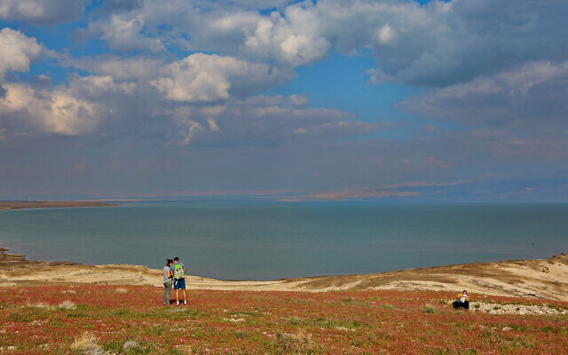 Israelis enjoy the blooming of flowers in the Dead Sea, February 20, 2020. (Yaakov Lederman/Flash90)