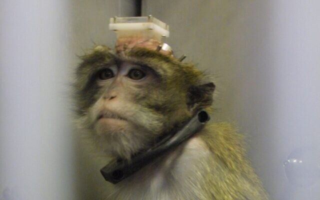 A monkey being used for experimentation in a laboratory at the Hadassh Ein Karem Hospital in Jerusalem, July 22, 2003. (Flash90)