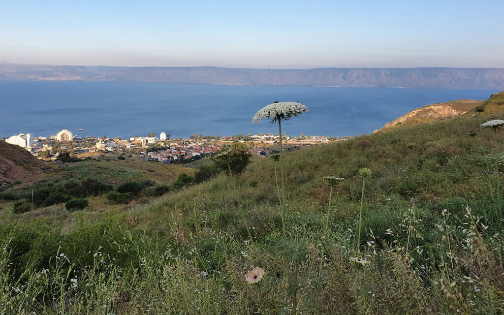 The view from the Dona Gracia Forest, named for a 16th-century Portuguese benefactor who established a home for Jewish refugees from the Inquisition in the area. (Asaf Ben-Zvi)