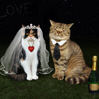 Newly married cats. (iridi/iStock via Getty Images)