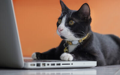 A cat working at the computer. (Tanased Hemathulin/iStock via Getty Images)