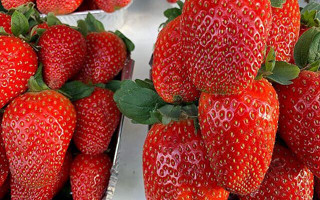 Strawberries (Sarah Tuttle-Singer)