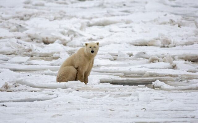 A polar bear sits on the Hudson Bay fresh ice next to a hole in the ice and close to the shore waiting for a seal meal outside Churchill, Mantioba, Canada, November 15, 2007. (Paul J. Richards/AFP)