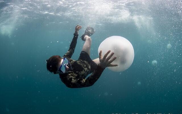 Researchers from University of Haifa's Leon H. Charney School of Marine Sciences examine a huge swarm of jellyfish that appeared off Haifa's coast. (Hagai Nativ/University of Haifa)