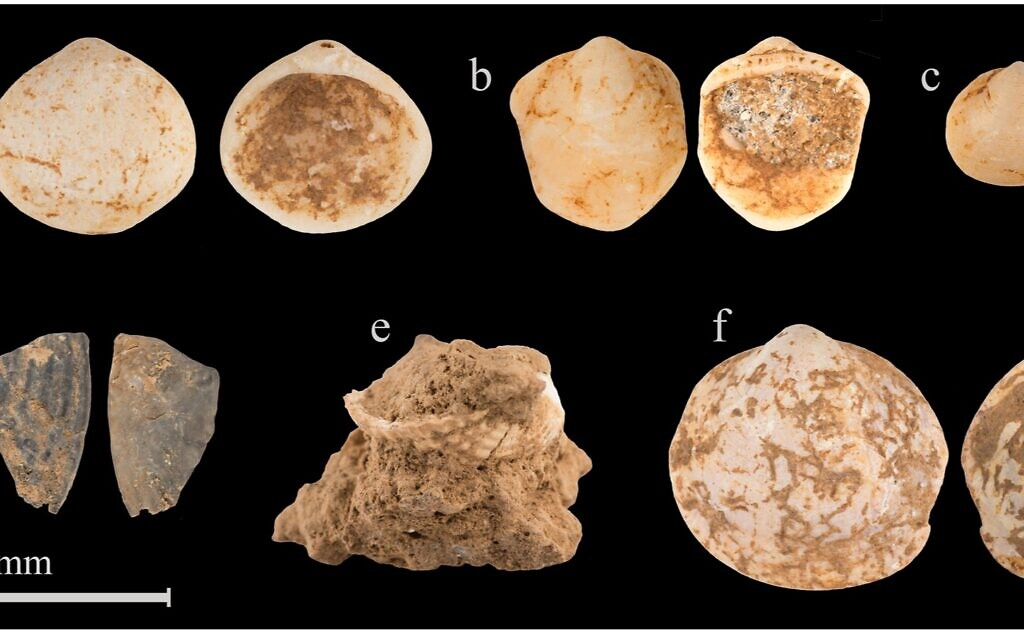 World's 1st necklace? Prehistoric painted shells, once on twine, found in Israel