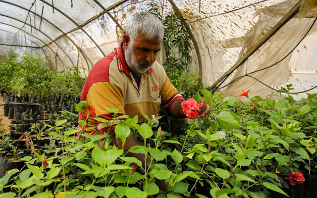 Abdel Rahman al-Najjar, a Palestinian, tends to plants in a flower nursery inside a greenhouse in the former Israeli settlement of Gadid, in Khan Yunis in the southern Gaza Strip, on August 10, 2020. (Said Khatib/AFP)