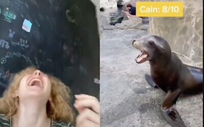 TikTok user Mallory Palmer created a mashup of sea lion and shofar calls that has gone semi-viral. (Screenshot)