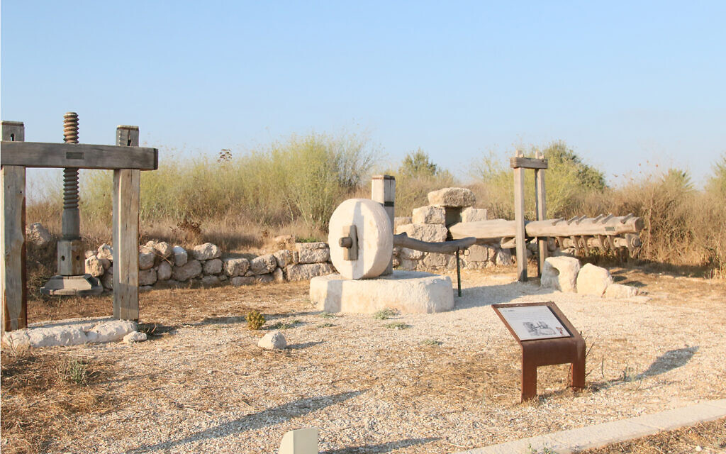 Ancient olive presses at Givat Titora's archaeological garden. (Shmuel Bar-Am)