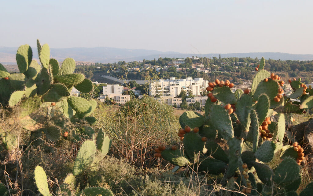 Ripe fruit and a view of the modern city of Modi'in seen from the Givat Titora archaeological garden. (Shmuel Bar-Am)