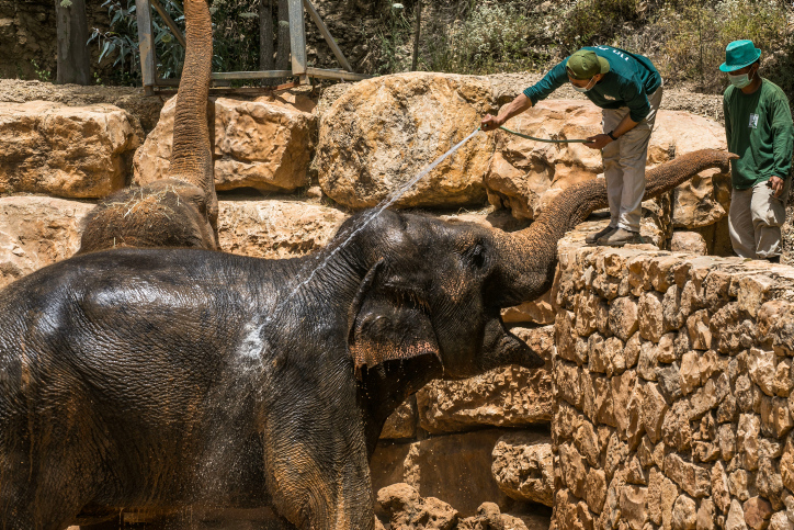 Elephants enjoy a shower at the Jerusalem's Biblical Zoo on a hot summer day, on May 20,2020. (Olivier Fitoussi/Flash90)