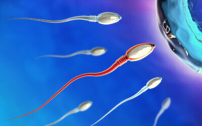 3D illustration of sperm cells moving to the right towards an egg (Christoph Burgstedt via iStock by Getty Images)
