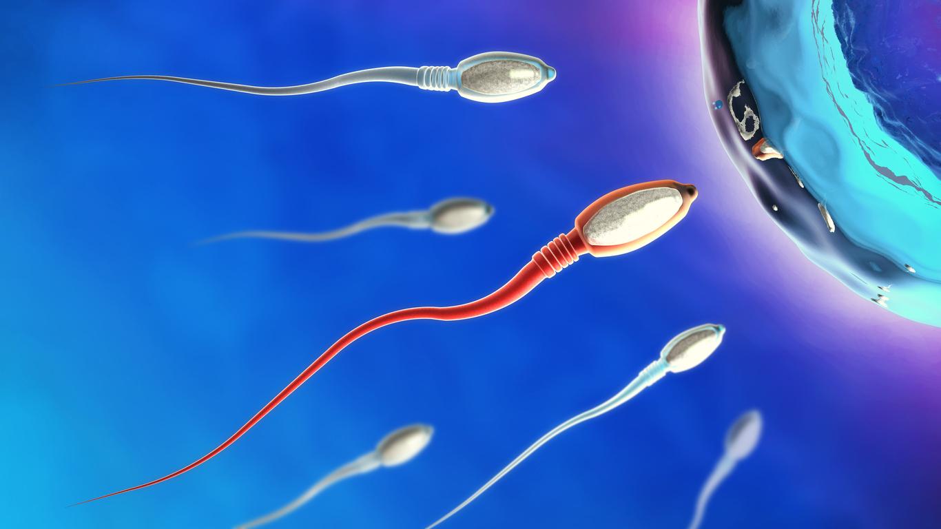 Moving sperm cells
