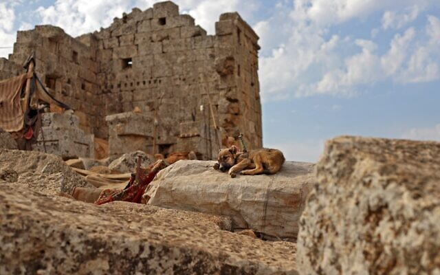 A dog rests near the ruins of a Roman temple at a makeshift camp of Syrians displaced by war at the UNESCO-listed site of Baqirha not far from the Turkish border, in a region of northwest Syria filled with abandoned Roman and Byzantine settlements (Abdulaziz Ketaz / AFP)
