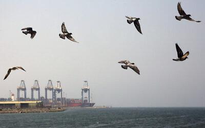 File: Seagulls fly over the Red Sea port city of Jiddah, Saudi Arabia, Oct. 11, 2019 (AP Photo/Amr Nabil)